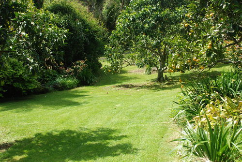 Lawn Mowing In West Auckland Localist