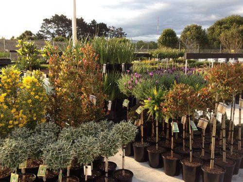 Garden Supplies In Auckland Localist