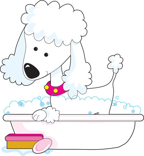 Dog Grooming Browns Bay