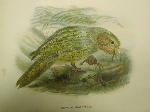 Bullers book of birds 1870s