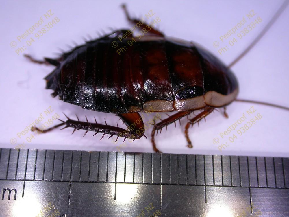 Pestproof Pest Control Hataitai Localist