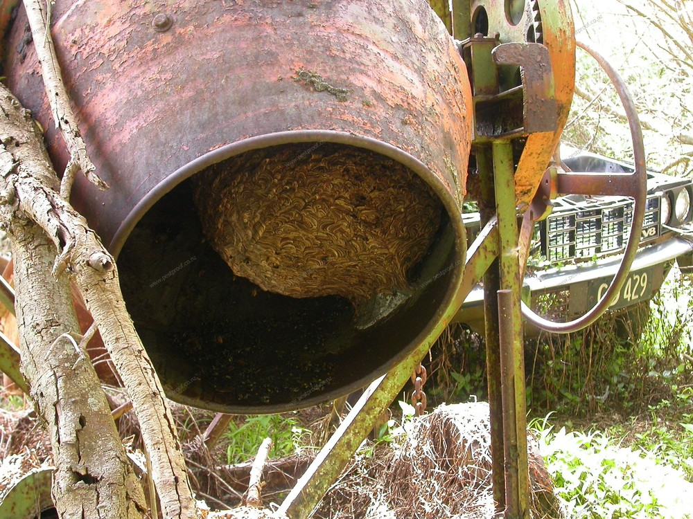how to get rid of wasp nest in roof space