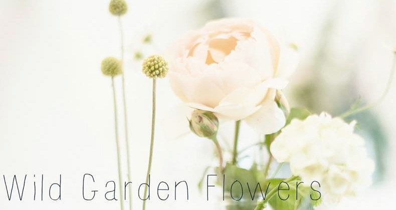 Wild Garden Flowers Gisborne Central Localist
