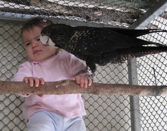 Ruby 6 months & black cockatoo