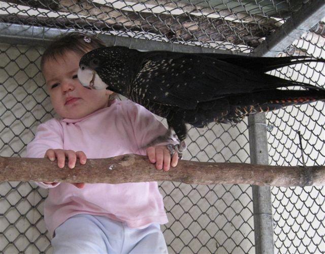Ruby 6 months & black cockatoo