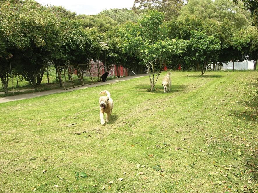 Dog Kennels Newmarket